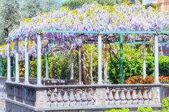 Terrace with wisteria in sorrento Stock Images