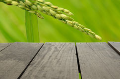 Terrace wood and beautiful paddy rice for background usage. Terrace wood and beautiful paddy rice for background Stock Photography