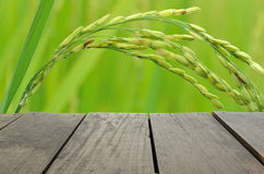 Terrace wood and beautiful paddy rice for background usage. Terrace wood and beautiful paddy rice for background Royalty Free Stock Images