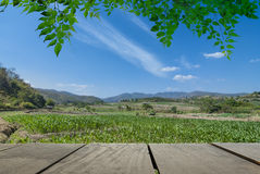 Terrace wood and landscape view for relax time in morning day Stock Photos