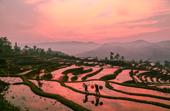The terrace of Yuanyang. Has been included in the world heritage list, is the Hani people`s 1300 years of life and growth in nature `sculpture idyllic landscape royalty free stock photos