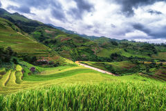 Terraced άποψη τομέων ρυζιού, μαύρισμα Λα PA, Βιετνάμ Στοκ Εικόνες