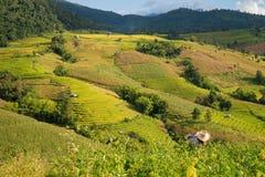 Terraced ρύζι στο βουνό, Chiangmai Ταϊλάνδη Στοκ εικόνα με δικαίωμα ελεύθερης χρήσης