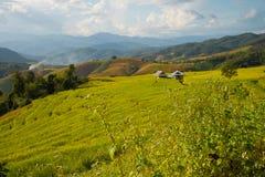 Terraced ρύζι στο βουνό, Chiangmai Ταϊλάνδη Στοκ Φωτογραφία