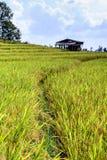 Terraced τομέας ρυζιού με το εξοχικό σπίτι στην απαγόρευση PA Bong Piang, Chiang Mai στην Ταϊλάνδη στοκ φωτογραφία με δικαίωμα ελεύθερης χρήσης