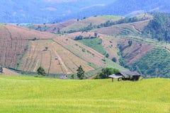 Terraced τομέας ρυζιού με το υπόβαθρο βουνών στην απαγόρευση PA Bong Piang, Chiang Mai στην Ταϊλάνδη, εστίαση στο εξοχικό σπίτι στοκ φωτογραφία
