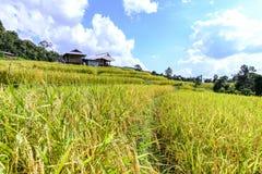 Terraced τομέας ρυζιού με το υπόβαθρο βουνών στοκ εικόνες με δικαίωμα ελεύθερης χρήσης