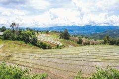 Terraced τομέας ρυζιού σε Chiangmai, Ταϊλάνδη Στοκ φωτογραφία με δικαίωμα ελεύθερης χρήσης