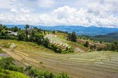 Terraced τομέας ρυζιού σε Chiangmai, Ταϊλάνδη Στοκ εικόνα με δικαίωμα ελεύθερης χρήσης