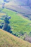 Terraced τομέας ρυζιού στην απαγόρευση PA Bong Piang, Chiang Mai στην Ταϊλάνδη στοκ εικόνες με δικαίωμα ελεύθερης χρήσης