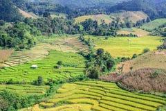 Terraced τομέας ρυζιού στην απαγόρευση PA Bong Piang, Chiang Mai στην Ταϊλάνδη στοκ εικόνες