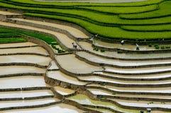 Terraced τομέας ρυζιού στη MU Cang Chai, Βιετνάμ Στοκ φωτογραφία με δικαίωμα ελεύθερης χρήσης