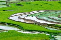 Terraced τομέας ρυζιού στη MU Cang Chai, Βιετνάμ Στοκ Φωτογραφίες