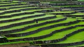 Terraced τομέας ρυζιού στη MU Cang Chai, Βιετνάμ Στοκ εικόνες με δικαίωμα ελεύθερης χρήσης