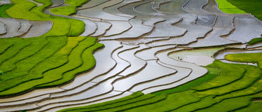 Terraced τομέας ρυζιού στη MU Cang Chai, Βιετνάμ Στοκ Εικόνα