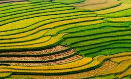 Terraced τομέας ρυζιού στο Βιετνάμ Στοκ Εικόνες