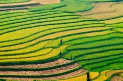 Terraced τομέας ρυζιού στο Βιετνάμ Στοκ εικόνα με δικαίωμα ελεύθερης χρήσης
