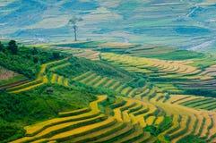 Terraced τομέας ρυζιού στο Βιετνάμ Στοκ Φωτογραφία
