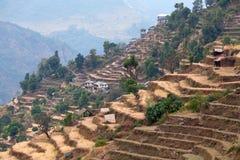 Terraced τομείς ρυζιού στο οδοιπορικό κυκλωμάτων Annapurna στο Νεπάλ Στοκ Εικόνες