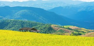 terraced χρυσός τομέας ρυζιού με τον ουρανό και το βουνό στοκ φωτογραφίες με δικαίωμα ελεύθερης χρήσης