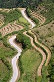 Terraced поля риса Стоковая Фотография