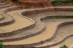 Terraced рис fields с водой в Mu Cang Chai Стоковое фото RF