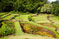 Terraced agriculture on Kauai. Example of terraced gardens in Kauai showing different plant types stock images