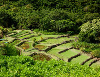 Terraced agriculture on Kauai Stock Image
