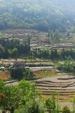 Terraced Farming Field in Southern China. Terraced farming field with trees and plants in mountain area in Summer.Farmers use plastic film to grow food.Taken in Stock Photo