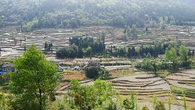 Terraced Farming Field in Southern China. Terraced farming field with trees and plants in mountain area in Summer.Farmers use plastic film to grow food.Taken in Stock Images