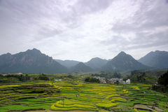 Terraced field Stock Photos