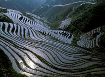 Terraced field Royalty Free Stock Images