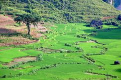 Terraced field landscape in Vietnam Stock Photo