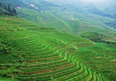 Terraced field and village Royalty Free Stock Photos