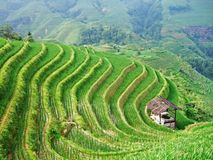 Terraced field and village Stock Photos