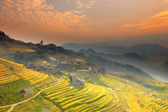 Terraced fields. Landscape of terraced rice fields royalty free stock images