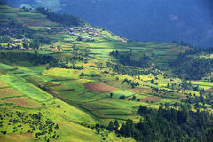 Terraced fields Stock Photography