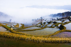 Terraced fields. Beautiful terraced fields and cloud and mist stock images