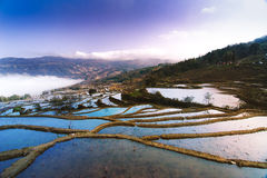 Terraced fields. Beautiful terraced fields and cloud and mist royalty free stock photography