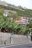 Terraced fields with banana in Camara de Lobos on Madeira Stock Photos