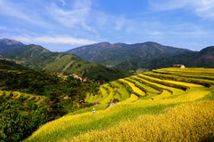 Terraced fields Royalty Free Stock Image