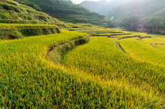 Terraced fields Royalty Free Stock Images