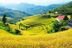 Terraced Fields In Che Cu Nha Village Stock Image