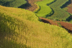 Terraced fields in china (1) Stock Photography