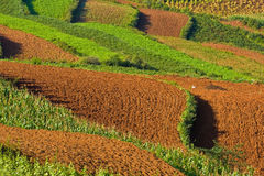 Terraced fields in china (3) Stock Photos