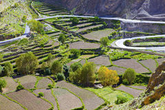 Terraced fields Stock Image