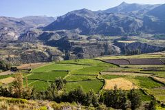 Terraced fields Colca Canyon, Peru Stock Image