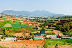 Terraced fields in Da Lat Vietnam Royalty Free Stock Images