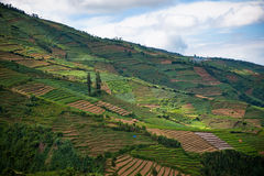Terraced fields of Dieng plateau, Java, Indonesia Stock Photography