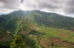 Terraced fields of Dieng plateau, Java, Indonesia Stock Photo